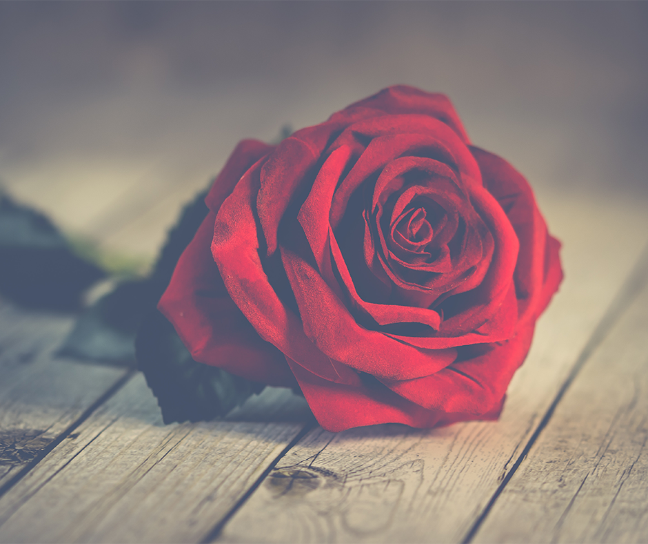 free-valentines-day-stock-photos-socialowl-2019-1