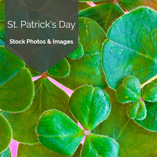 Free St. Patrick's Day Stock Photos & Images for Social Media Posting