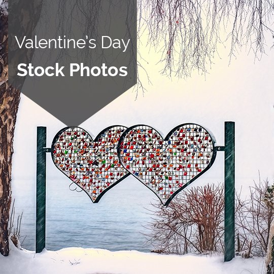 Free 2019 Valentine's Day Stock Photos