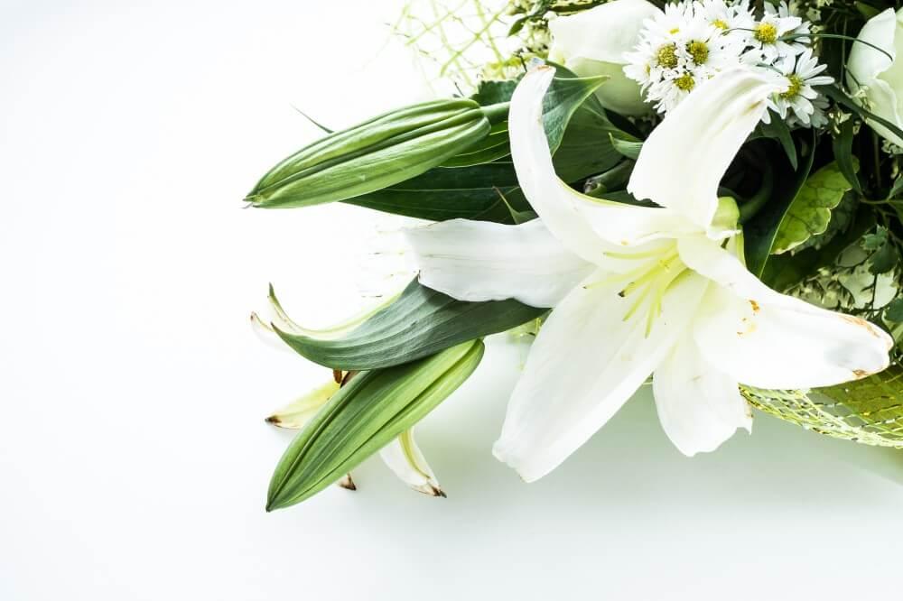 Liljer — en velduftende og elegant favoritt i blomstervasen