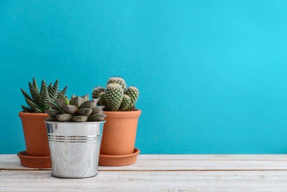 Stueplanter som en fargerik og trendy interiørdetalj