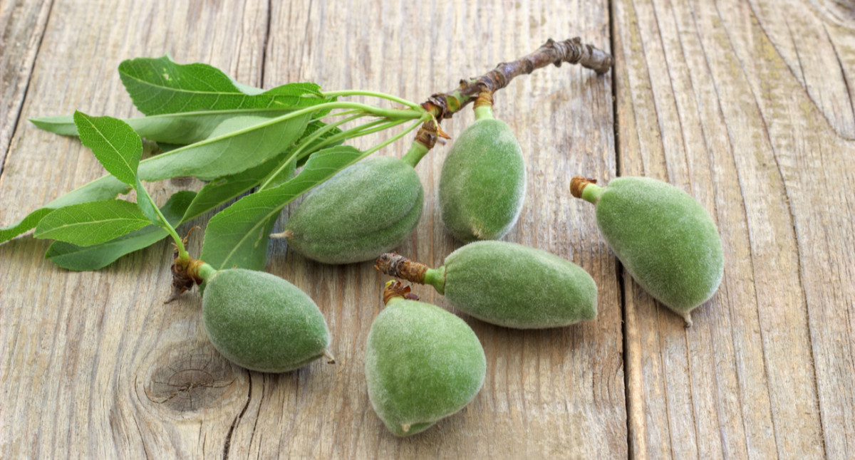 The Origin and History of Almonds