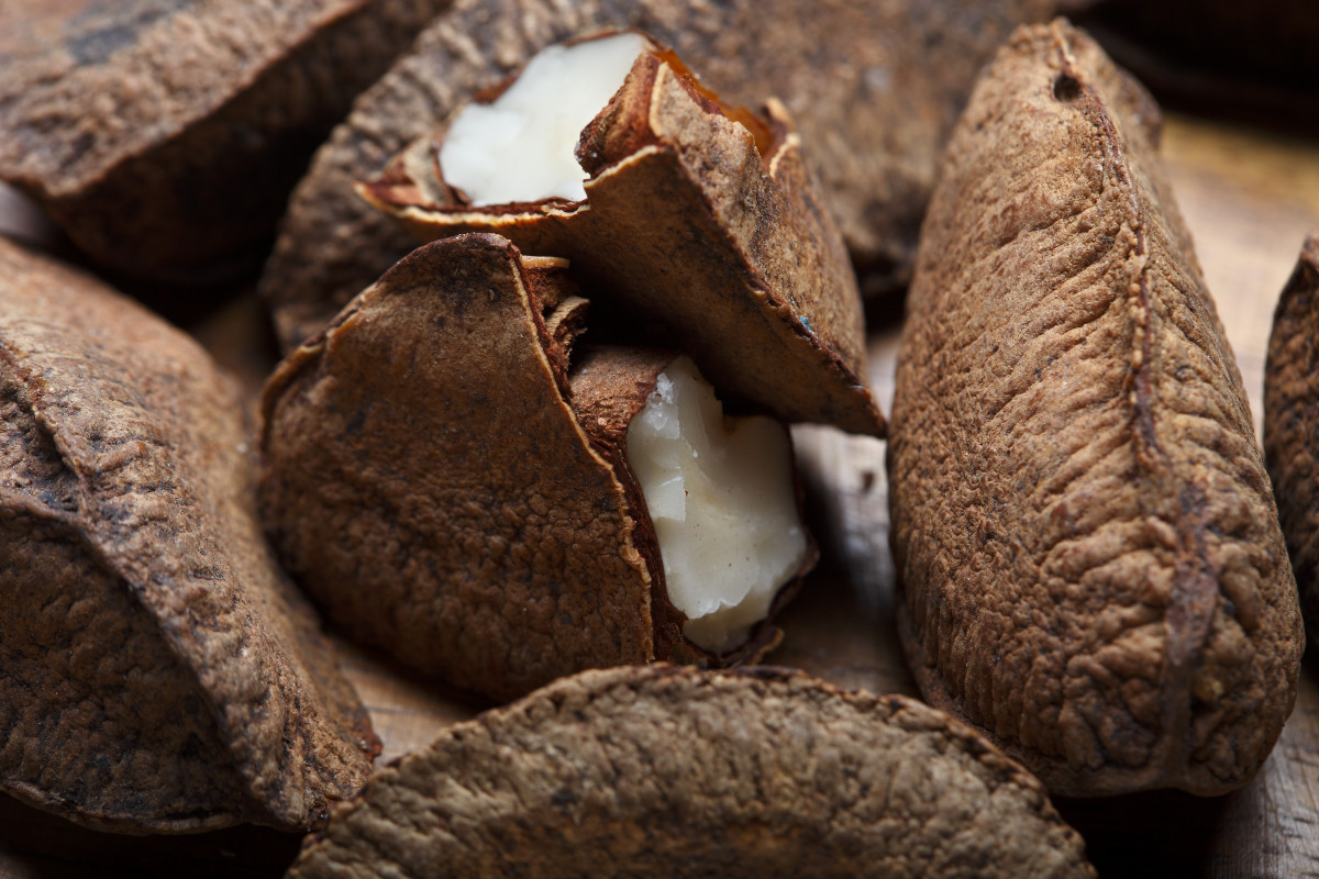 Everything You Need To Know About Brazil Nuts
