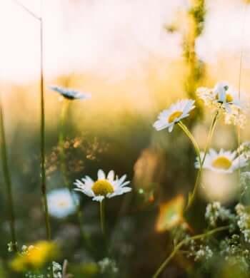 11 Easy Steps To Celebrating a Swedish Midsummer