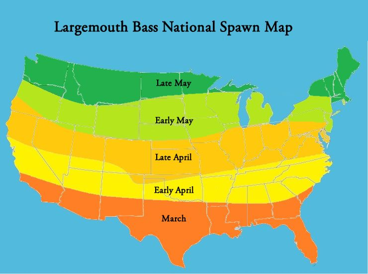 Bass Spawn In the United States