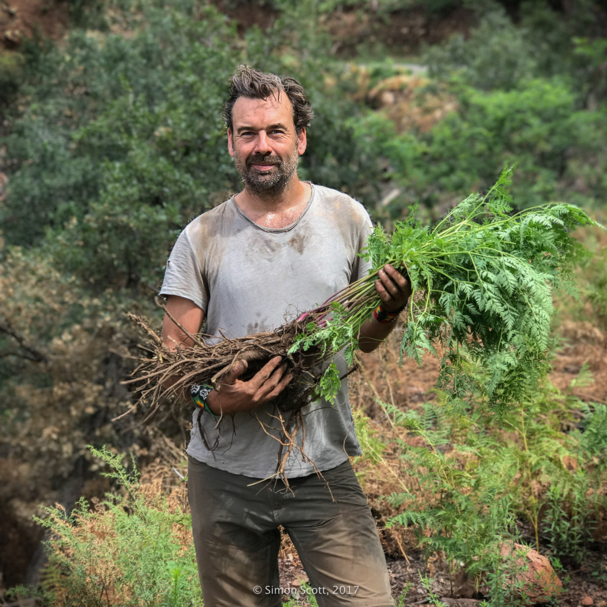 Wild Herbal •Simon Scott