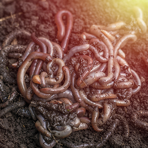 encourage soil organisms into your compost bin
