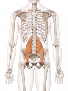 bonmedico-Psoas-dehnen-Anatomie-des-großen-Lendenmuskels