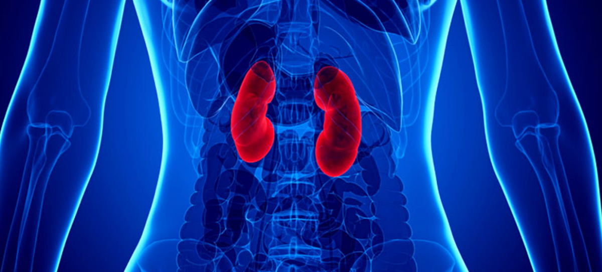 Is een eiwitrijk dieet om af te vallen slecht voor de nieren?
