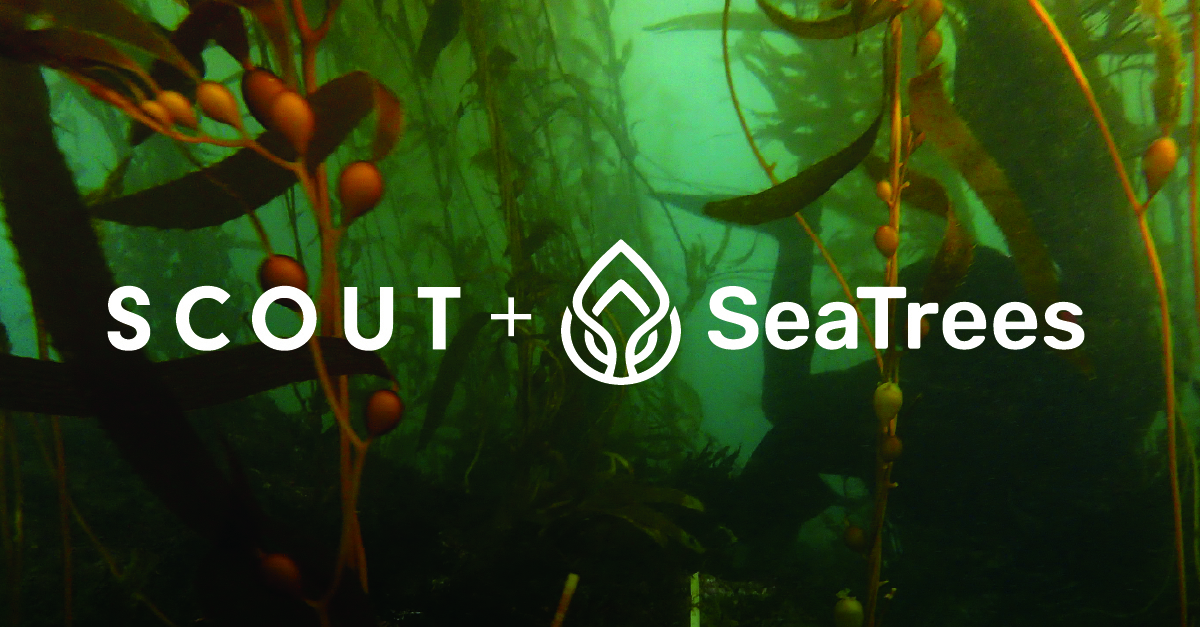 Scout & SeaTrees Partner Together To Turn the Tide on Ocean Health with Kelp Reforestation