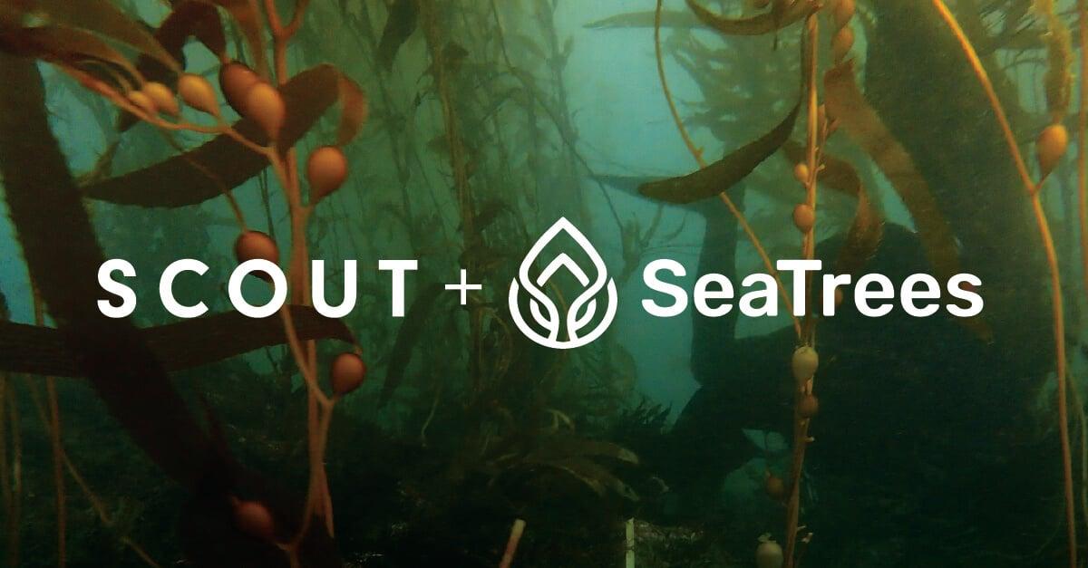 Kelp Reforestation is the Path Forward