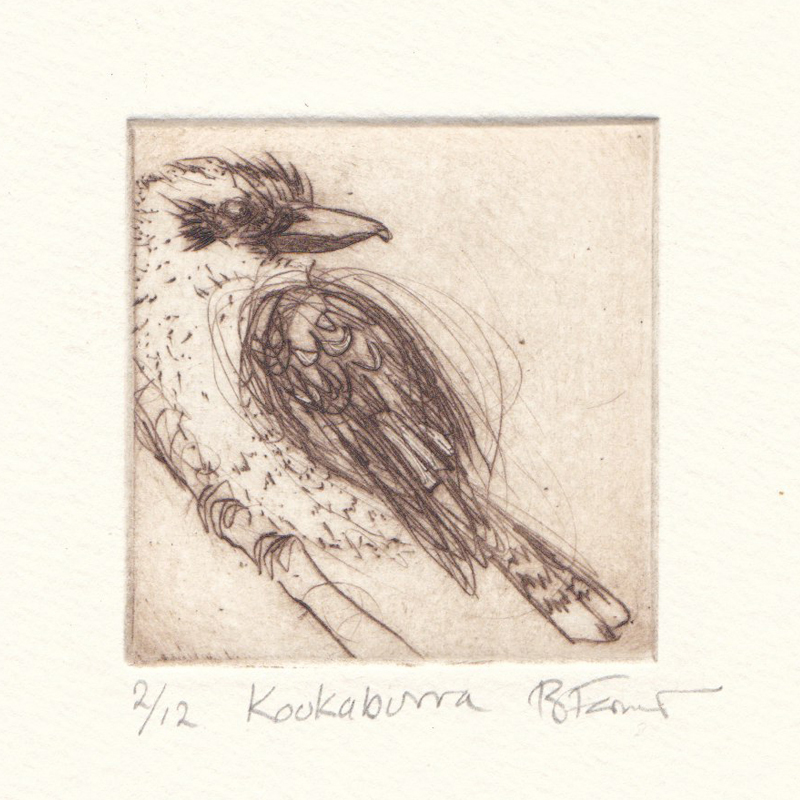 Celebrating the Kookaburra