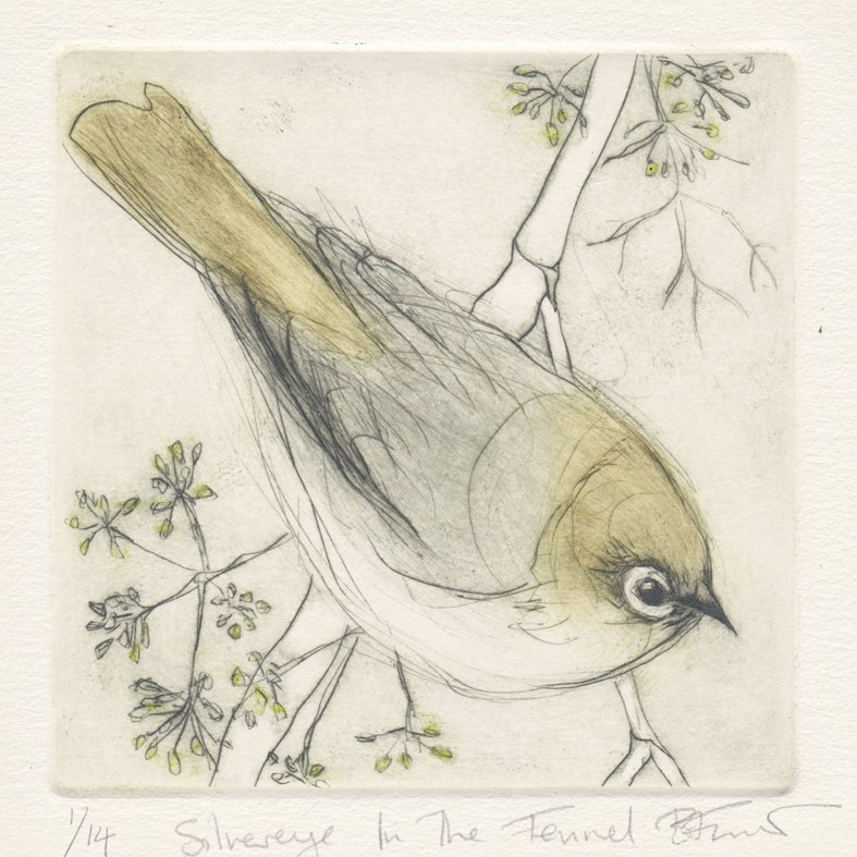 visitors - Silvereye in the fennel