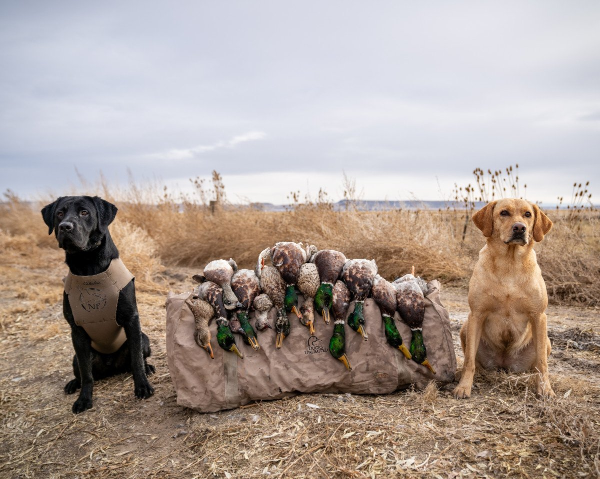 Top 10 Hunting Dog Breeds