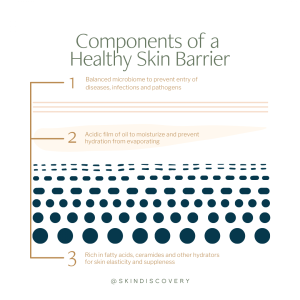 Components of a healthy skin barrier