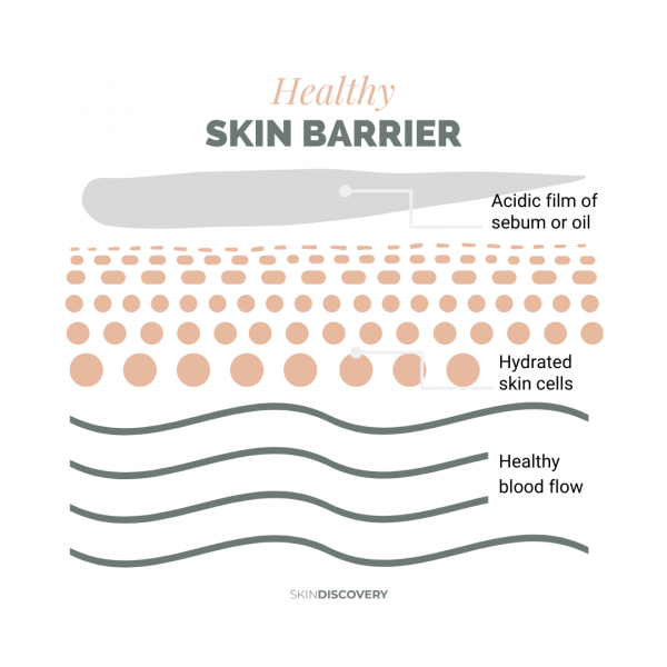 Skin barrier function graphic