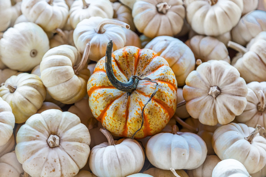 Pumpkin is a great fall skin care ingredient