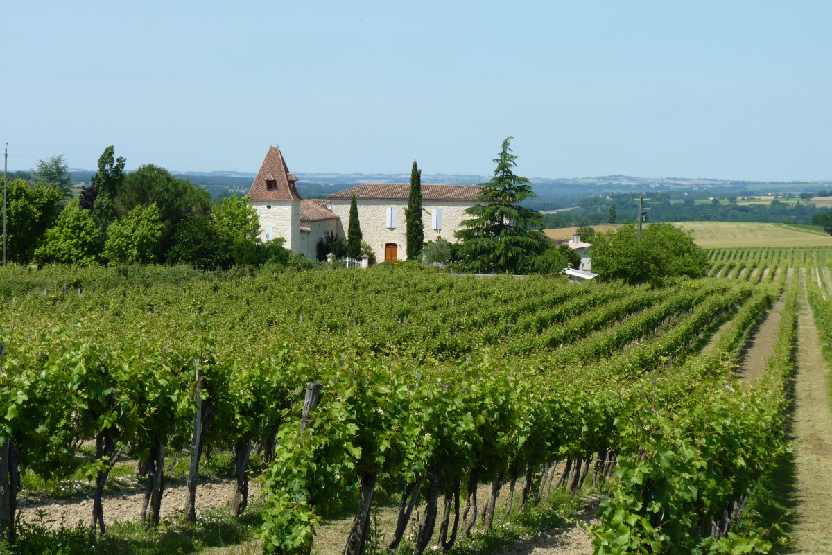 Gascony Wines Part One:  A Beginner's Guide