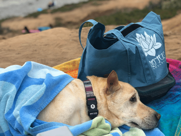 the lotus trolley bag at the beach