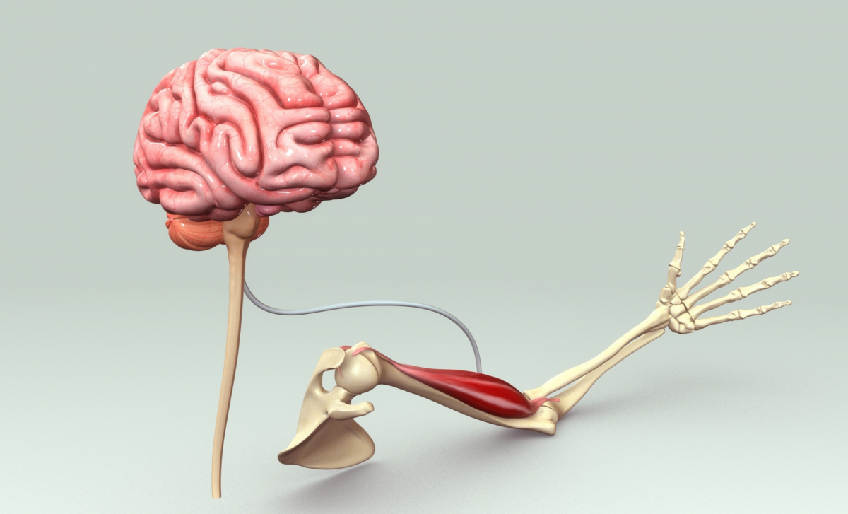 Understanding and Improving Your Mind Muscle Connection