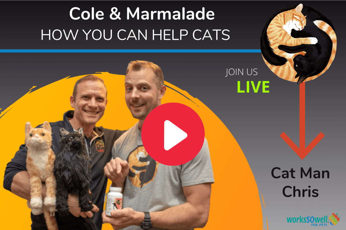 Cole & Marmalade are back interview with cat man Chris