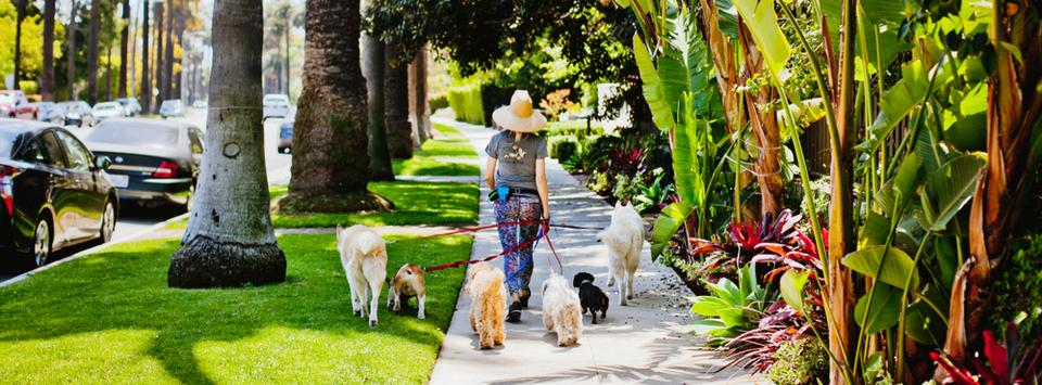How to Find a Pet Sitter