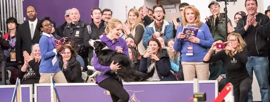 Interview with Westminster Masters Agility Winner Jennifer Crank