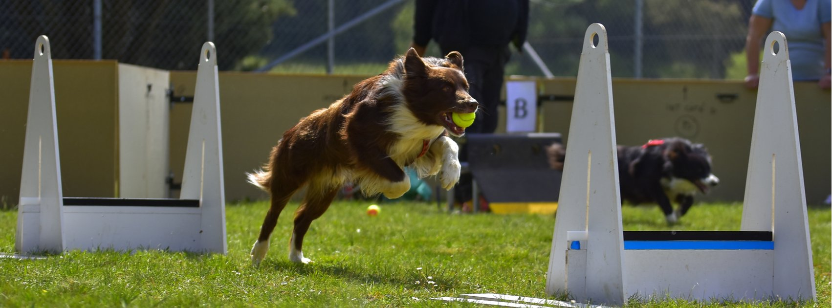 Flyball Training Tips During the Off-Season: Interview with Aaron Robbins of Rocket Relay