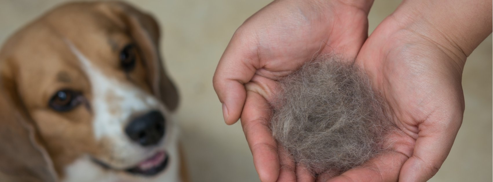 Why Is My Dog's Fur Falling Out?