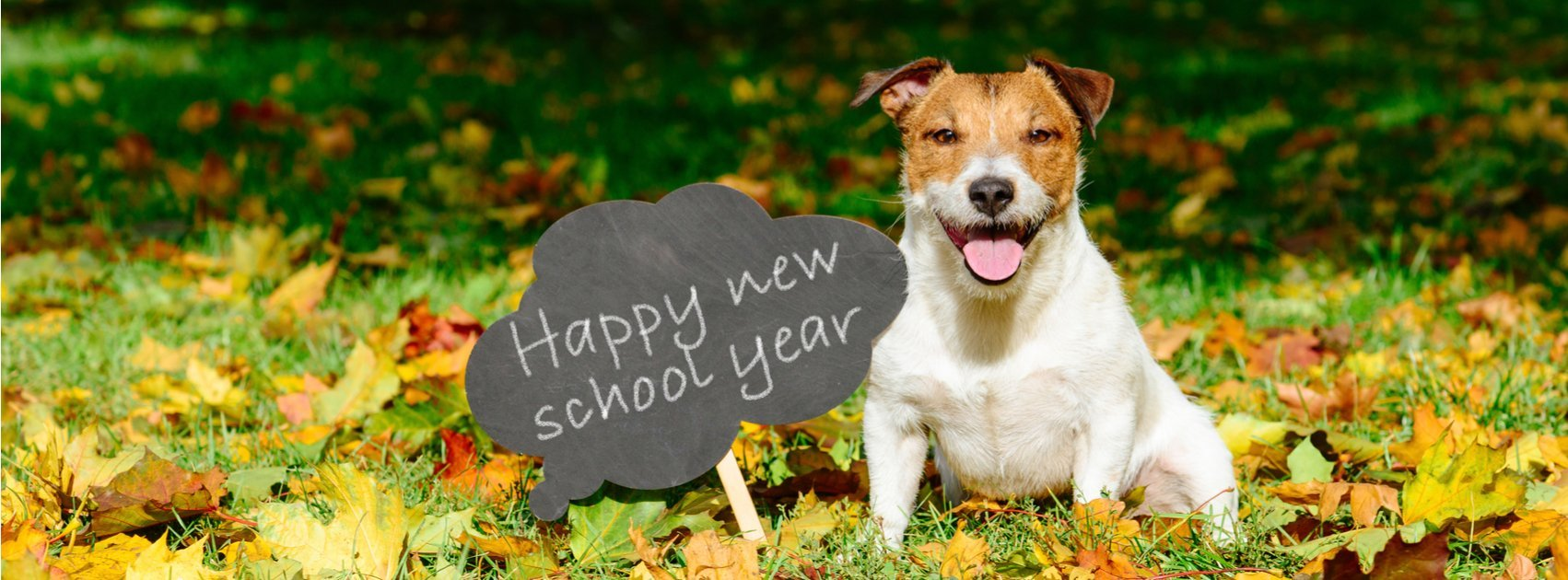 Back to School for Pets: How to Reduce Anxiety