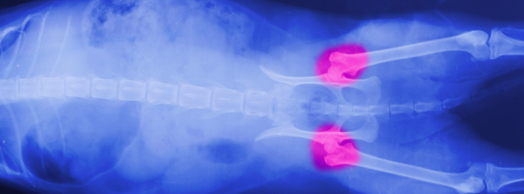 What Are the Causes of Canine Hip Dysplasia?