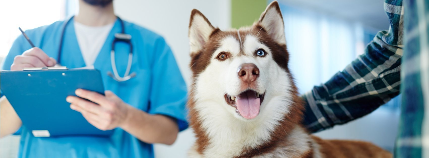 How to Determine If Your Dog Should Have a PennHIP Evaluation