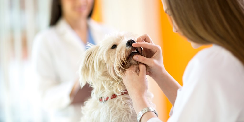 What dental conditions should I look for in my dog?