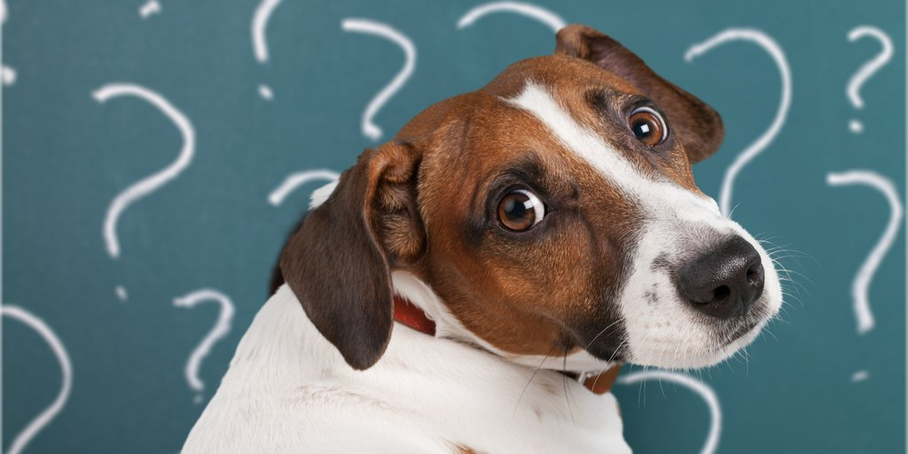 What is the difference between gingivitis and stomatitis in dogs?