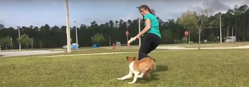 """What You Need to Know About """"Leads"""" in Agility"""