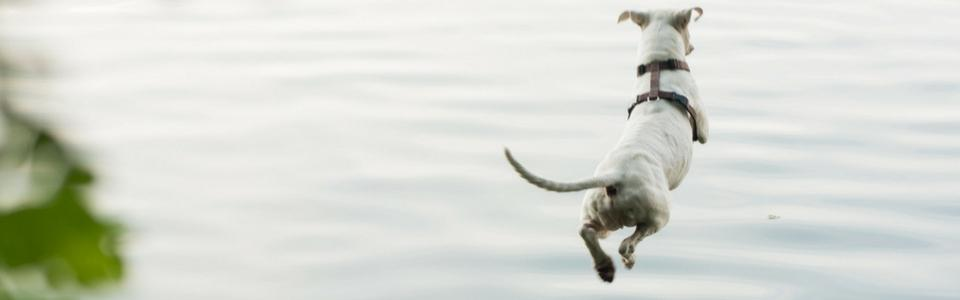 5 Steps to Introduce Your Dog to Dock Diving