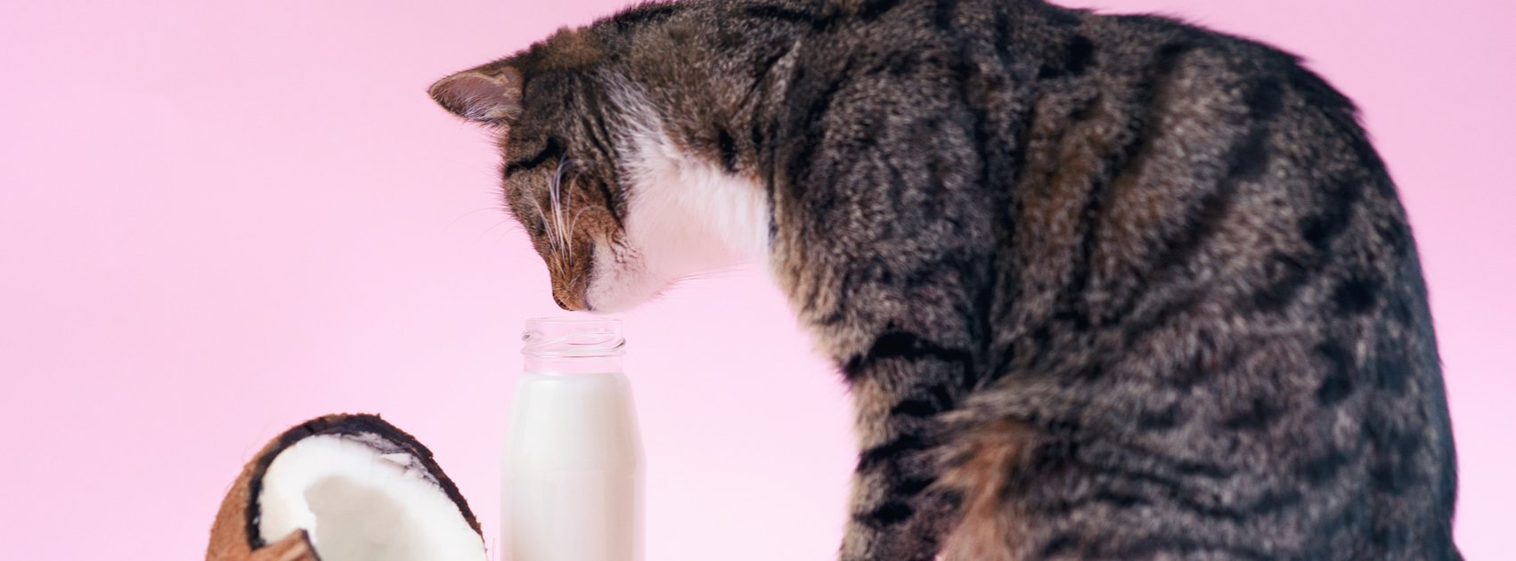 Is Coconut Oil Safe For My Pet?