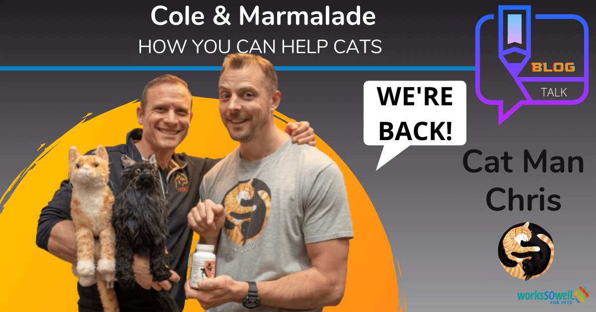 Cole & Marmalade are Back! Interview with Cat man Chris