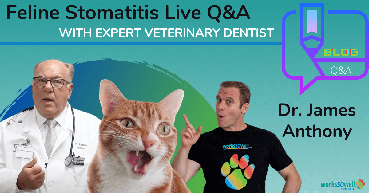Feline Stomatitis Q/A with Veterinary Dentist