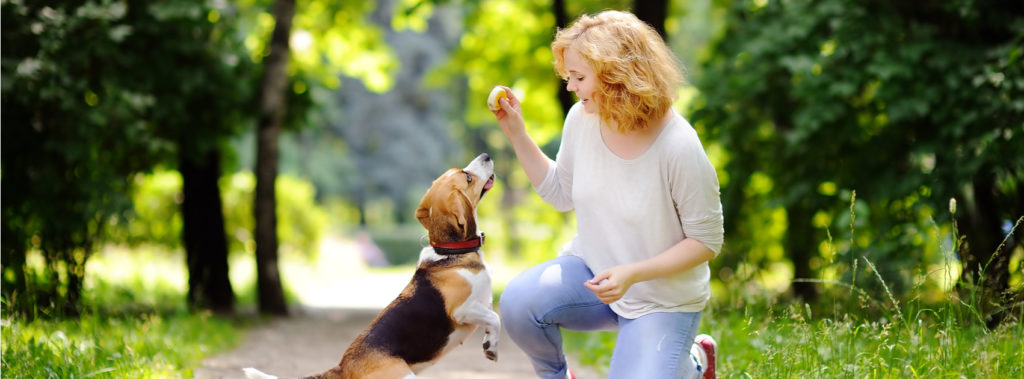 How Dog Trainers Can Stay Strong and Healthy