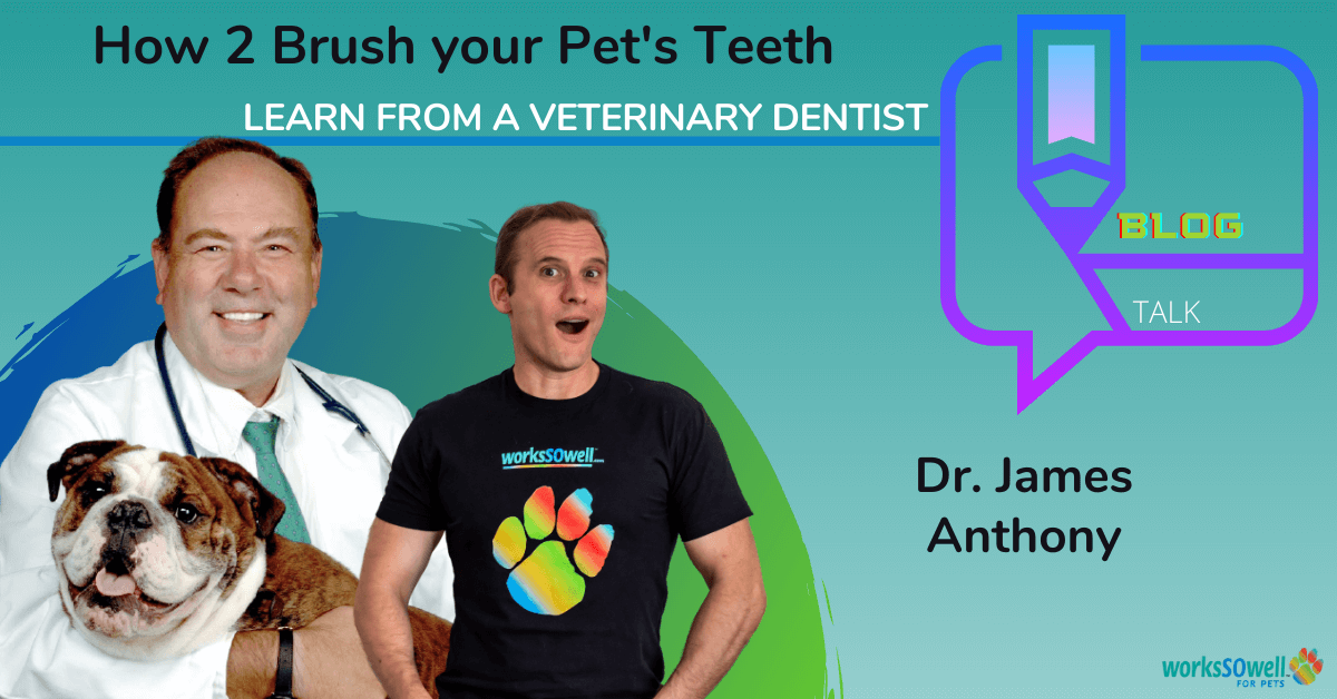 How to brush your Dog's teeth?
