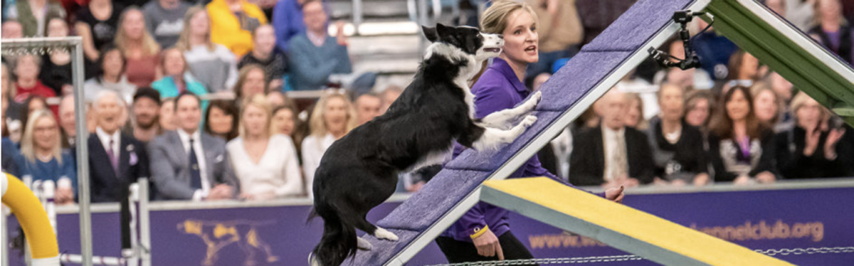 Interview with Westminster Masters Agility Champion Winner Jennifer Crank