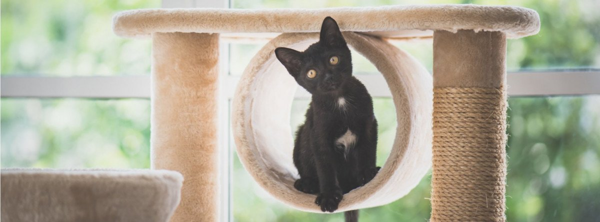 The Importance of Feline Exercise: Why Your Cat Needs Space to Climb