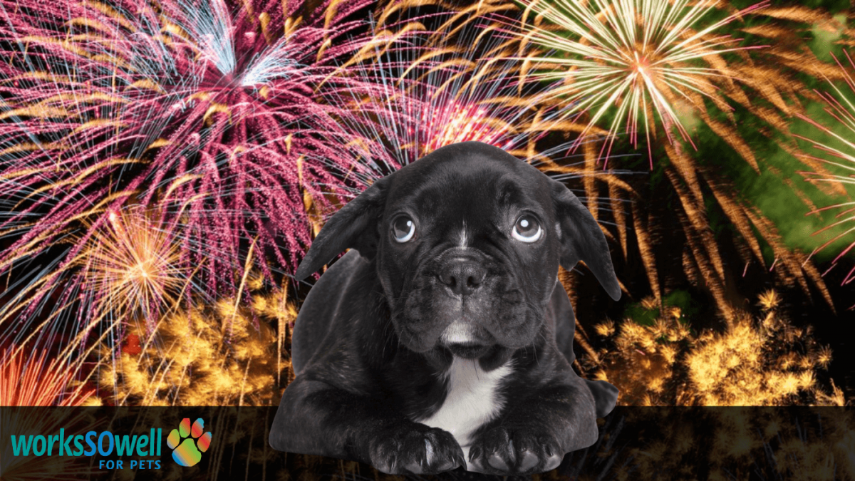 Fireworks and Your Pet: Preparing an Anxious Pet!