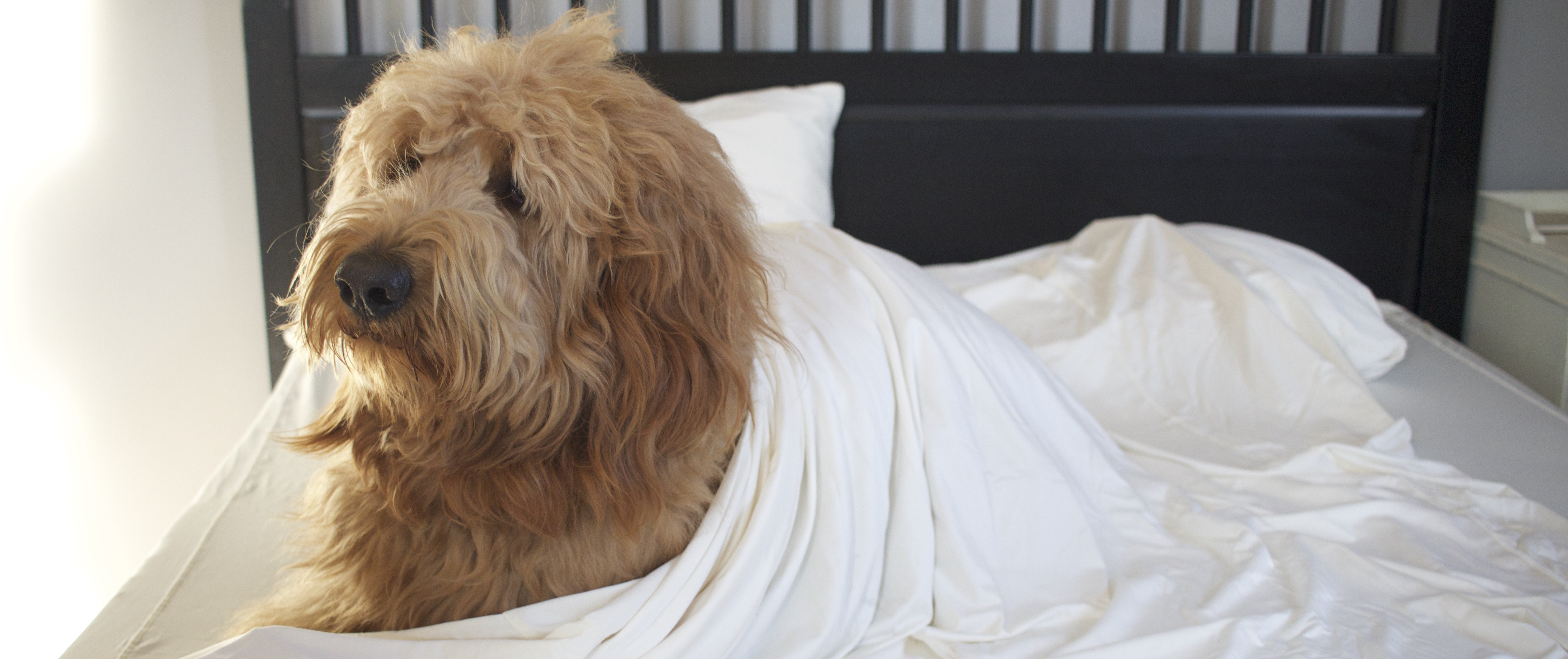 Sweet Dreams: Thoughts on Sleeping in SHEEX by Abbie and Winston The Dood