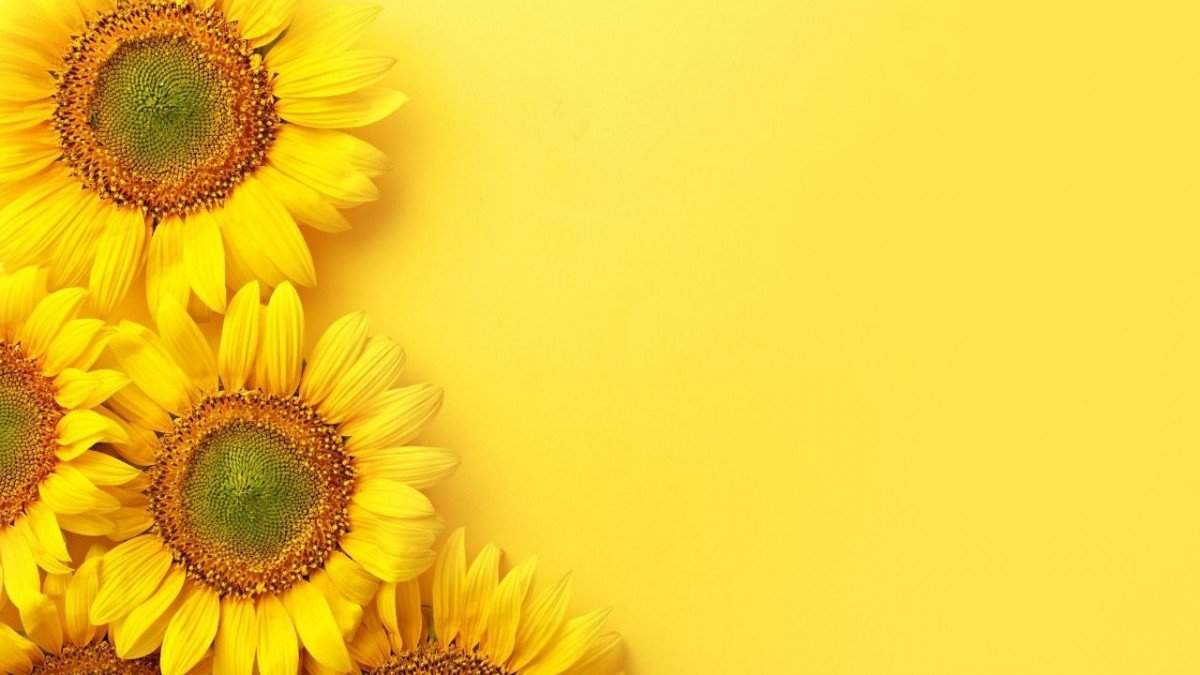 Sunflowers for disability travel assistance