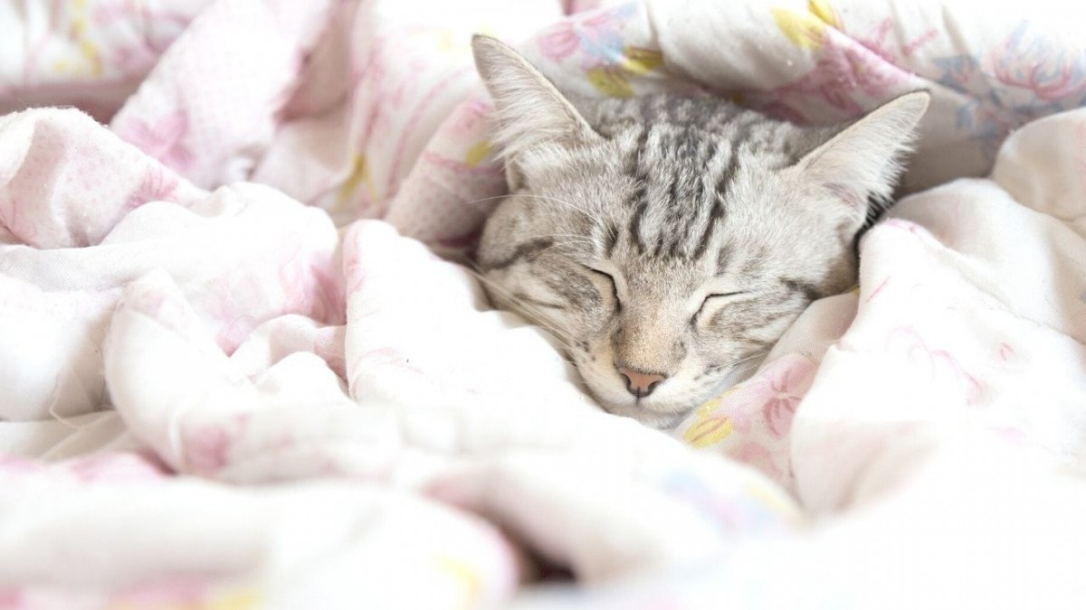5 tips to cope with painsomnia