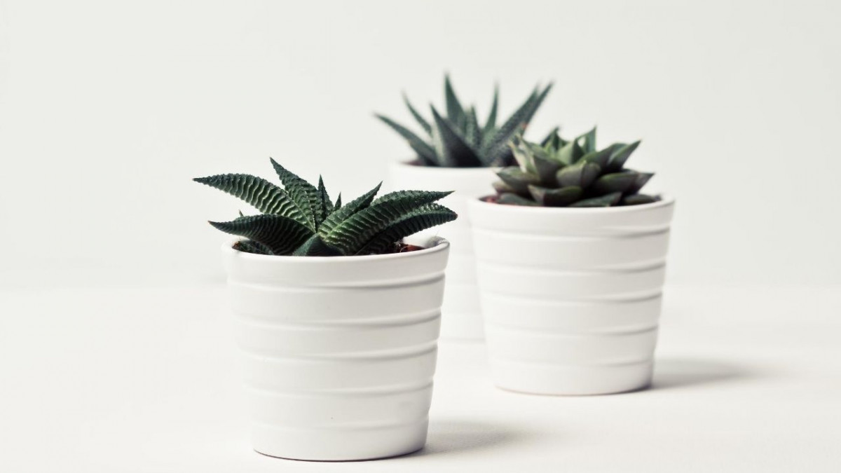 Can indoor plants reduce stress?