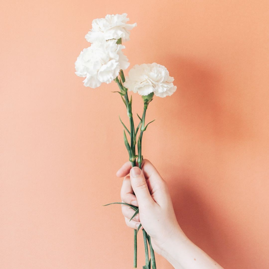 January Birth Flowers - Carnation and The Snowdrop