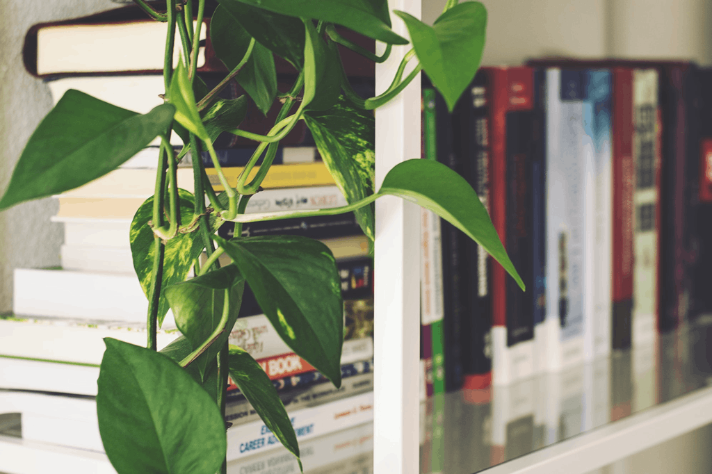 Everything You Need to Know About Looking After Indoor Plants